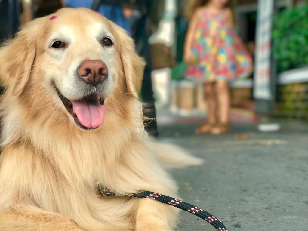 Os condomínios podem trazer algumas regras específicas sobre os animais de estimação, mas será que é possível proibi-los? Saiba mais!
